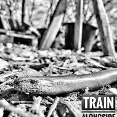 Train alongside nature