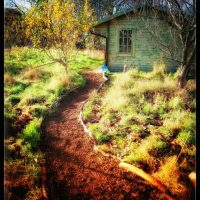 My journey with Inspired Forest School