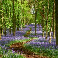 Natural Mindfulness Taster Walk